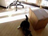 Забавный китайский котенок